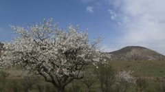 Almond tree in the highlands Stock Footage