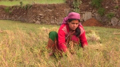 Nepal: Harvest by Hand - stock footage
