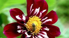 Single flower - stock footage