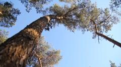 Windy tree - stock footage