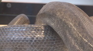 Snake Stock Footage