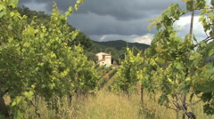 A house seen through rows of grape vines Stock Footage