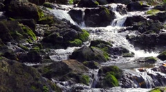 Mossy Jungle Stream Stock Footage