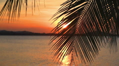 Palm leaf and sunset Stock Footage