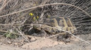 Stock Video Footage of turtle in Dana
