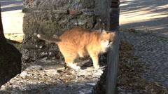 Italy Umbria sunlit cat Stock Footage