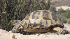 turtle 2 - stock footage