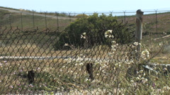 Rusty Chain Link Fence with Foreground Flowers and Field in Distance Stock Footage