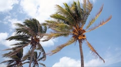 Coconut palm trees Stock Footage