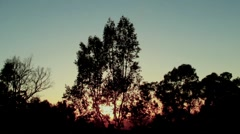 Sun Behind Trees Stock Footage