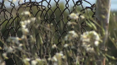 Chain Link Fence Close Up with Flowers - stock footage