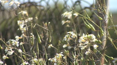 Rack Focus - Rusty Chain Link Fence - Foreground White Flowers Stock Footage