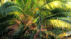 Green palm branches Stock Footage