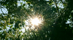 Stock Video Footage of bright sun shines through tree foliage