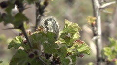 Insects on the bush. Stock Footage