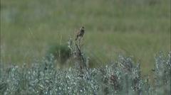 sage & sparrow - stock footage