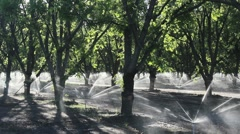 Pecan Trees Water Jets Stock Footage