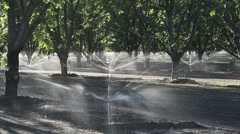 Pecan Farm Irrigation Stock Footage