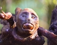 Smoked monkey head in an Amazonian Indian village Stock Footage