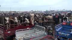 Sunday livestock market Kashgar, China Stock Footage