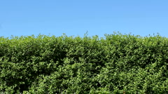 Hedge Stock Footage