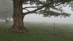 Foggy morning Stock Footage