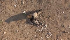 Bird of prey Stock Footage