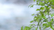 Mountain Creek & Tree Leaves Rack Focus - HD 1080 Stock Footage