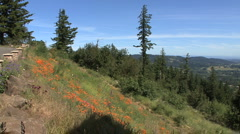 Oregon Willamette Valley view pan Stock Footage