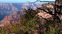 Grand Canyon Vista Stock Footage