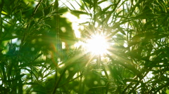 Bright sun shines through tree foliage Stock Footage