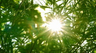 Stock Video Footage of bright sun shines through tree foliage