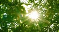Bright sun shines through tree foliage Stock Footage