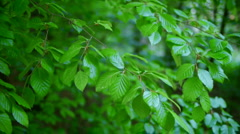 Leaves Breeze - stock footage