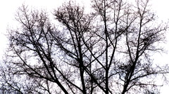 Evening tree and wind - stock footage