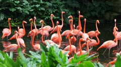 Flamingo lake Stock Footage