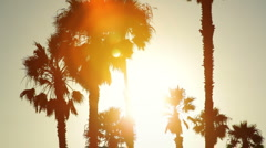 Palm trees silhouetted at sunset - stock footage