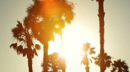 Palm trees silhouetted at sunset Stock Footage