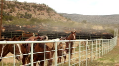 Horse Corral and Cattle Corral HD 30P 5s - stock footage