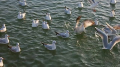 Seagulls fighting for food and flying away Stock Footage