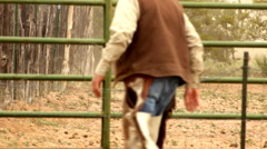 Cowboy Regards Calf Awaiting Sort in Pen Corral Stock Footage