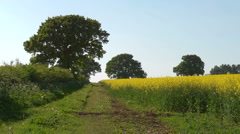 A farm track with rape flowers (Brassica napus) in Spring, seamless loop Stock Footage