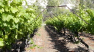 Stock Video Footage of Winery Grapes red wine vinedresser winepress israel wine lifestyle winery israel