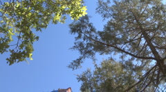 Wild Trees and Sky Stock Footage