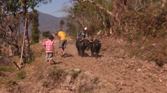 Nepal: Plowing the Fields Stock Footage