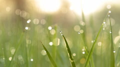 Dew drops on green grass. Shot with slider. II. Stock Footage