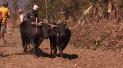 Nepal: Plowing the fields with Oxen Stock Footage