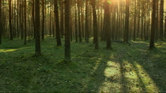evening forest walk - stock footage