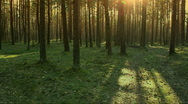Stock Video Footage of evening forest walk