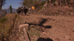 Nepal: Plowing and Planting Stock Footage